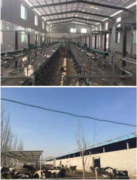 太原市小店区小牛线奶牛场屋顶396kw分布式光伏牛棚项目