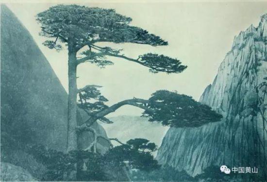图一:目前所见第一张迎客松照片(1914年摄)