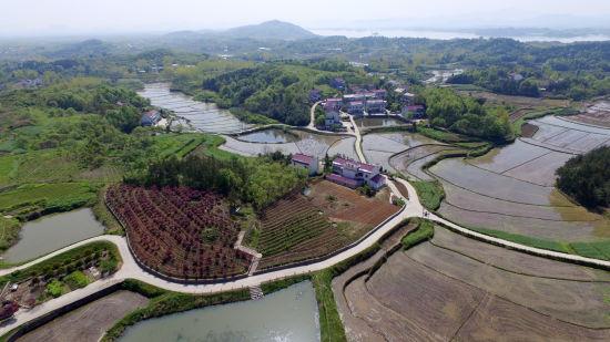 云中东 马宜明)五显镇余畈村位于舒城县西部,国家5a级风景旅游区