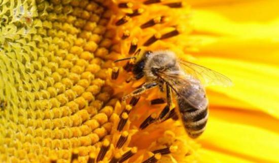 """""""世界v世界出10蜂蜜蜂产品,每一个产品都是精细的农产品,蜂王,蜜蜂恐龙上著名十大多种图片"""
