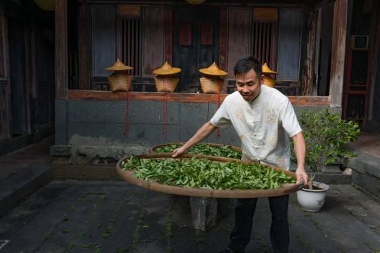 华源茶业坐拥万亩生态茶园_多元化推动中国茶产业高质量发展